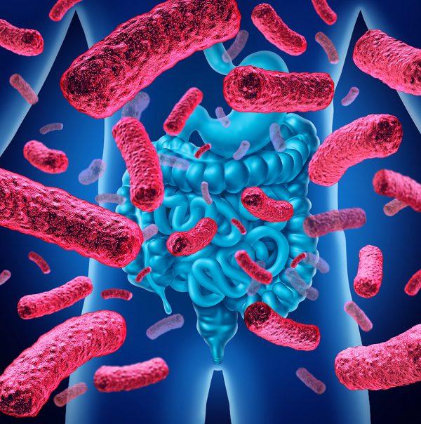 Microbiota e dieta, novità e conferme - Federico Francesco Ferrero
